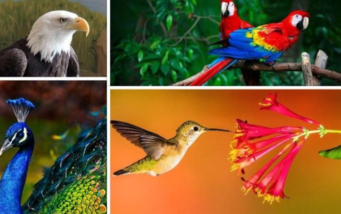 50 Types of Birds with Names and Images, bird lower classifications, birds pictures, columbidae, common types of birds, eagles schedule types of birds
