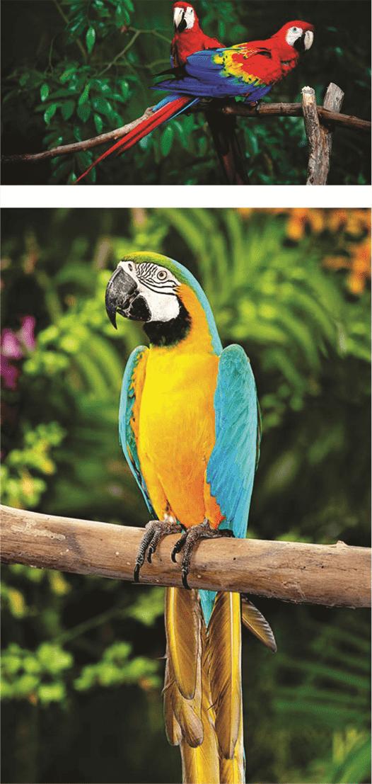 parrot talking parrots for sale types of parrots true parrot indian parrot what do parrots eat parrot bird information where do parrots live lovebird