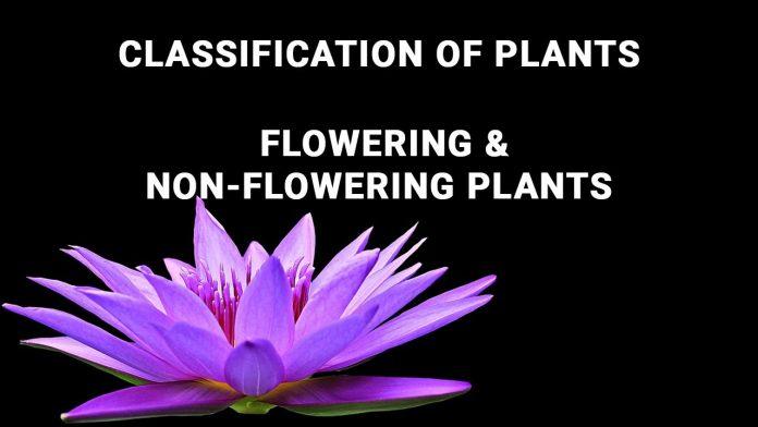 Non-Flowering Plants