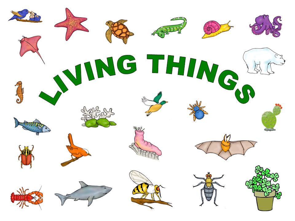 characteristics of living things, living things, What are the characteristics of living things