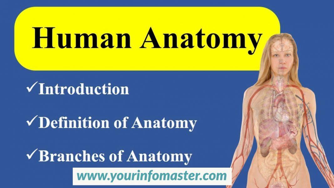 Anatomy, branches of anatomy, types of anatomy, what is anatomy, gross anatomy, macro anatomy, micro anatomy, regional anatomy, systemic anatomy, cytology, biology, physiology, applied anatomy, cross section anatomy, embryology, histology, pathological anatomy, developmental anatomy, radiology