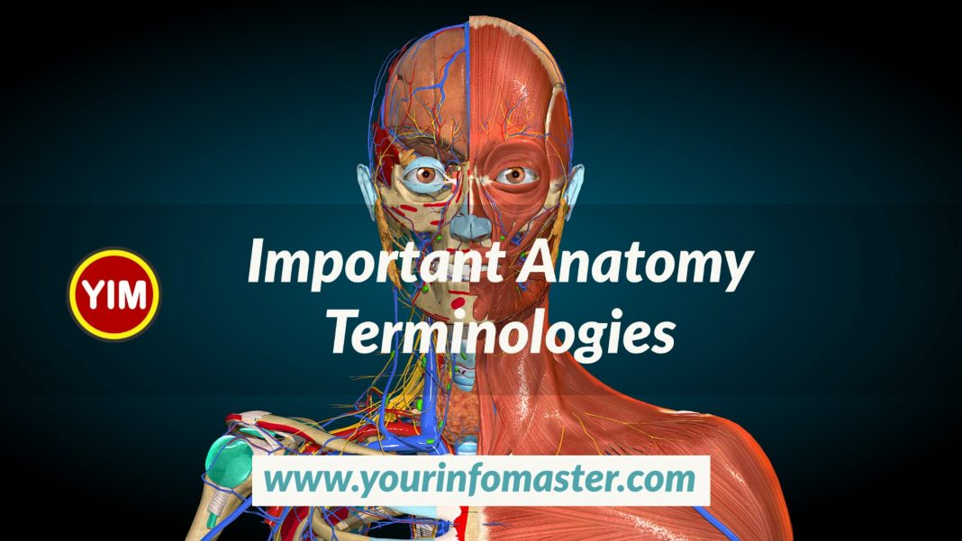 Anatomy, Anatomy Terminology, Important Anatomy Terminologies, medical terminology, medical terminology book, Pharmacy Technician, what is anatomy